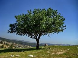 plant a tree quote plant your tree of with hypnotherapy in