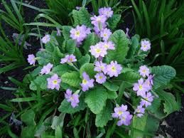 4 amazing flowers for the garden that bloomin u0027 garden