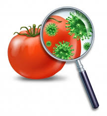 the potential risk of food poisoninghealth news field health