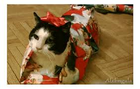 cat christmas wrapping paper cat christmas gif find on giphy
