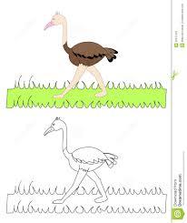 o for ostrich stock photos image 30577423