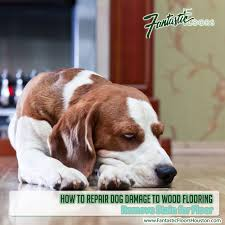 How To Get Dog Urine Out Of Laminate Flooring Fantastic Floors Inc How To Repair Dog Damage To Wood Flooring