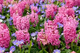 Fragrant Plants List - grow these 10 fragrant flowers for a heavenly smelling garden