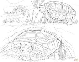 baby turtle hatching from egg coloring page free printable