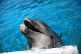 Seeking Dolphin Dolphins Could A New Home In Arizona Desert Takepart