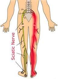 Back Knee Anatomy Do Pt Stretching Vs Nerve Glides