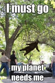 Tree Meme - best of the falling bear meme smosh
