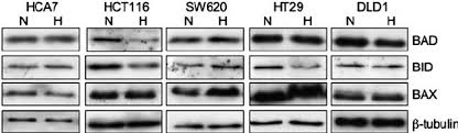 bad bid protein expression of the proapoptotic proteins bad bid and bax