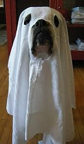 Halloween Costumes Bulldogs Boo English Bulldogs Pets Animals Bulldog Dogs Breed