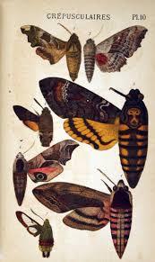 best 25 butterfly symbolism ideas on pinterest butterfly