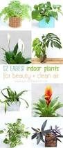 12 easy indoor plants for beauty clean air a piece of rainbow