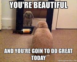 You Re Beautiful Meme - you re beautiful and you re goin to do great today mirror bunny