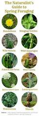plants native to michigan 1038 best foraging wild edible plants u0026 other images on