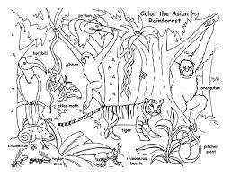 preschool jungle coloring pages jungle coloring page jungle animals coloring pages preschool page