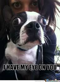 I Got My Eyes On You Meme - i have my eye on you by serkan meme center