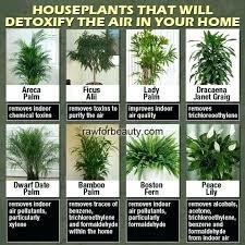live indoor plants live house plants for sale fresh on custom indoor okada eng best