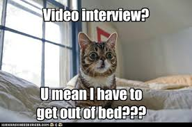 Lil Bub Meme - lil bub video interview shock video interviewing pinterest