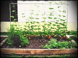 backyard bed and wood wire garden raised flowers ideas diy design