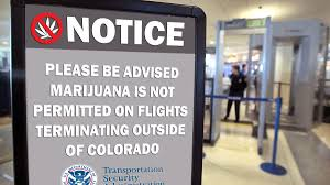 traveling with pot some tsa screeners allow marijuana on planes