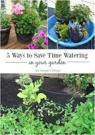 how to save water in gardens and small holdings the scrooge