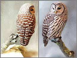 barred owl tupelo wood carving artwork by tim mceachern birds