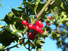 Plant Used As A Christmas Decoration Christmas Decoration Wikipedia