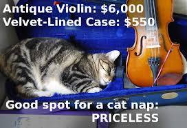 Violin Meme - antique violin cat meme cat planet cat planet
