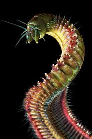 127 best werms images on pinterest worms ocean life and alien