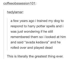 Dog Text By Memeemma Meme - dog funny harry potter text post tumblr image 2423789 by
