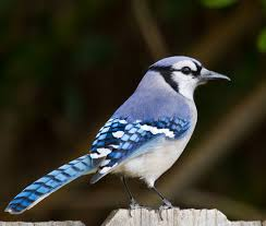 Audubon Backyard Bird Count by Wonderful Audubon Backyard Bird Count Awesome Design Home Design
