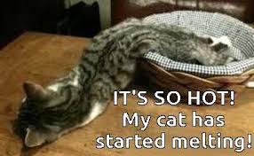 Melting Meme - my cat is melting memes
