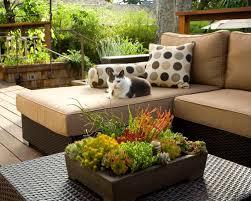 low bowl succulent planter houzz