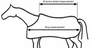 Rug Measurement Equestrian Shopping Size Guide