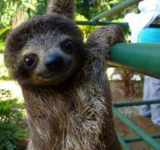 Cute Sloth Meme - all things sloth pictures and memes of sloths