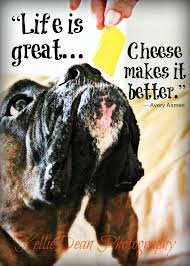 boxer dog sayings 11 best my photos with quotes images on pinterest animal quotes