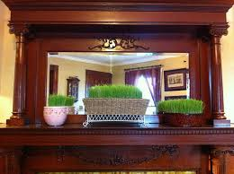 diy growing decorative wheatgrass for easter or anytime frugal