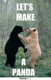 Animals Memes - funny fun lol hilarious bear animals memes pics images photos