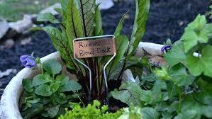 urban vegetable gardening 9 urban vegetable garden ideas to eat