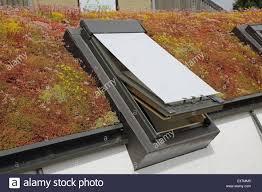 a green roof consisting of a diverse range of sedum plants