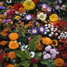 lovable japanese flower garden japanese flower garden in