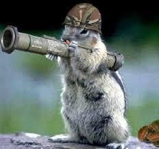 Squirrel Meme - bazooka squirrel memes memeshappen