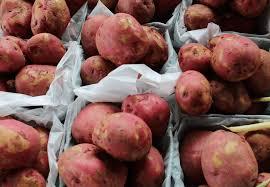 thanksgiving lancaster pa smucker u0027s farm market real lancaster county