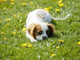 love you wallpaper dogs animals wallpapers in jpg format for free