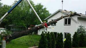 damaged trees brainerd minnesota tree care services