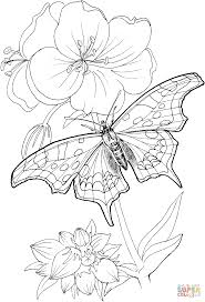 butterfly stands on a plant coloring page free printable