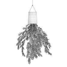 plant in inversed hanging planter 3d cgtrader