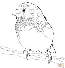 zebra finch coloring page free printable coloring pages