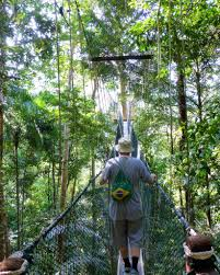 Under Canopy Rainforest by Walking The Canopy In The Taman Negara Malaysia Safe And