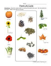 life cycle of plants worksheet 2