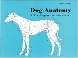 Internal Dog Anatomy Dog Anatomy Peter Goody Peter C Goody 9780851316369 Amazon